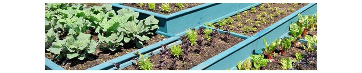 Monitoring Your Garden