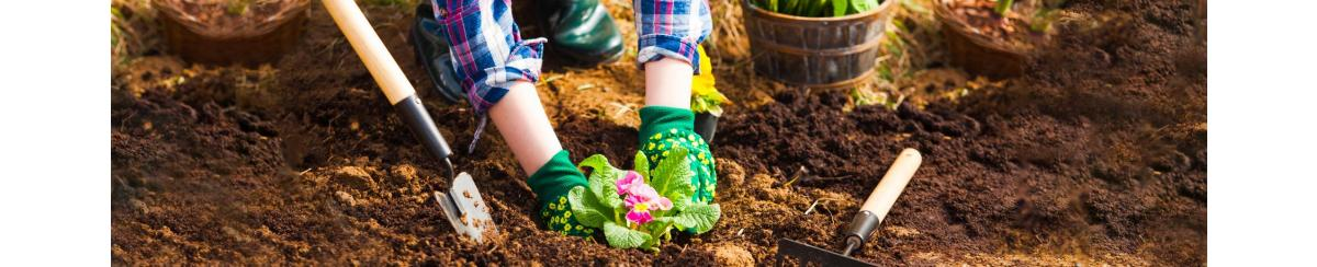 Gardening Guide: When to Get Your Flowers in the Ground