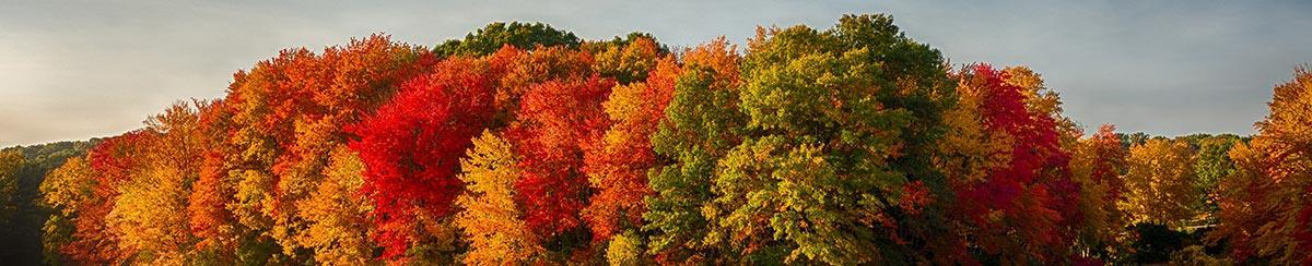 Why Do Leaves Change Color? A Deeper Look Into Beautiful Fall Colors