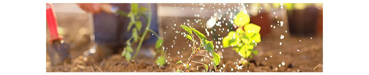 Farm Manages Irrigation by Collecting Rainfall Data