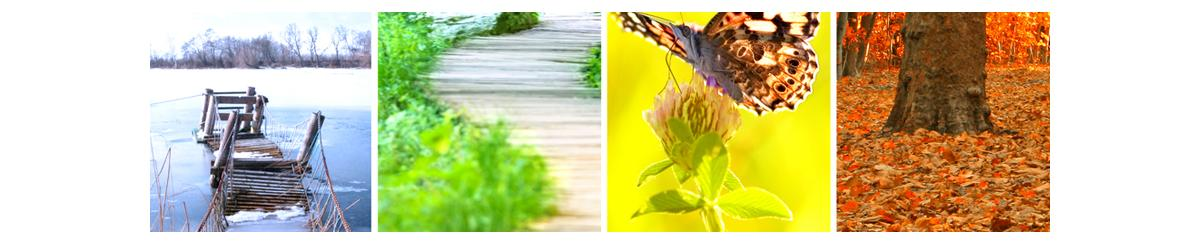 Images representing the four seasons - Winter, Spring, Summer and Fall