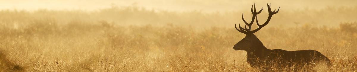 How the Weather Affects Deer Hunting