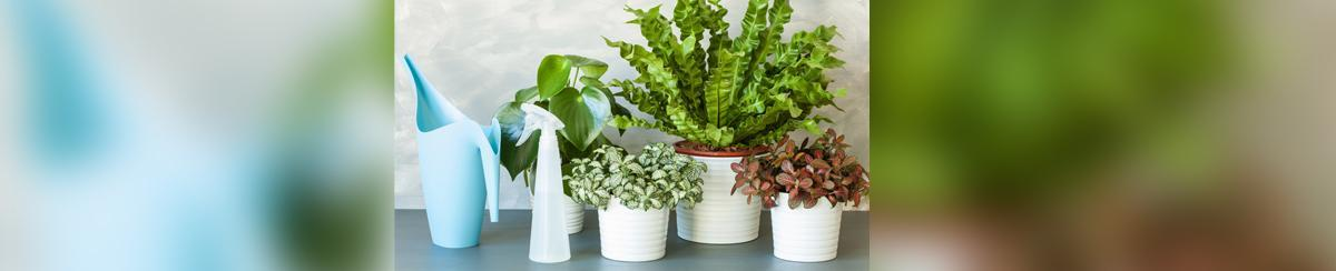 Signs Of Overwatering and Other Houseplant Care Tips