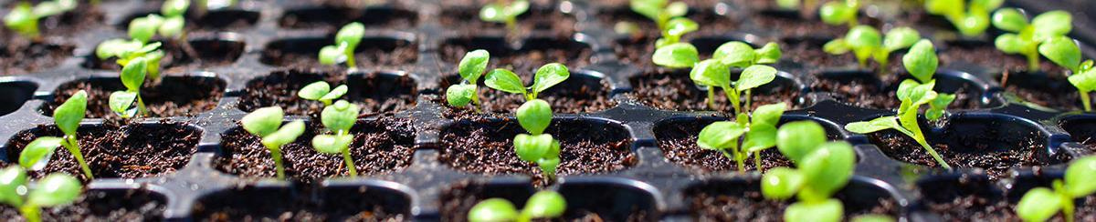 5 Gardening Tips to Improve Seed Germination