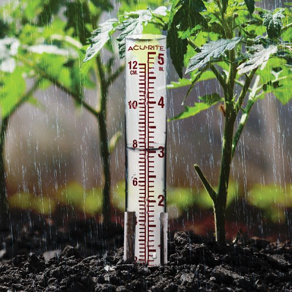 5-inch Glass Rain Gauge in a garden - AcuRite Weather Monitoring Devices