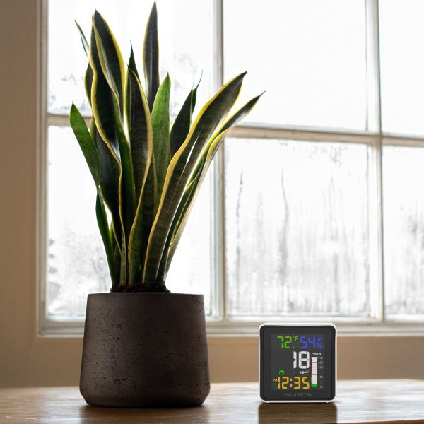 indoor air quality monitor lifestyle view next to a plant
