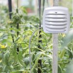Outdoor Monitor with Liquid & Soil Temperature Sensor in a garden - AcuRite Weather Monitoring Devices