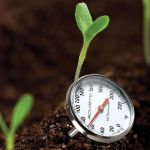 Stainless Steel Soil Thermometer being used in a garden - AcuRite Gardening