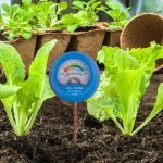 Soil Moisture Meter being used in a vegetable garden - AcuRite Gardening