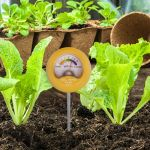Soil pH Meter being used in a vegetable garden - AcuRite Gardening
