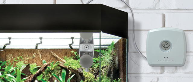 monitor terrarium temperature