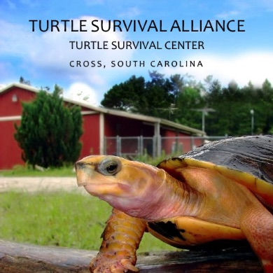 Turtle Survival Alliance Turtle Survival Center - Cross, South Carolina