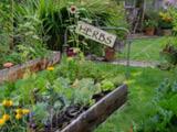 monitor garden sensors online
