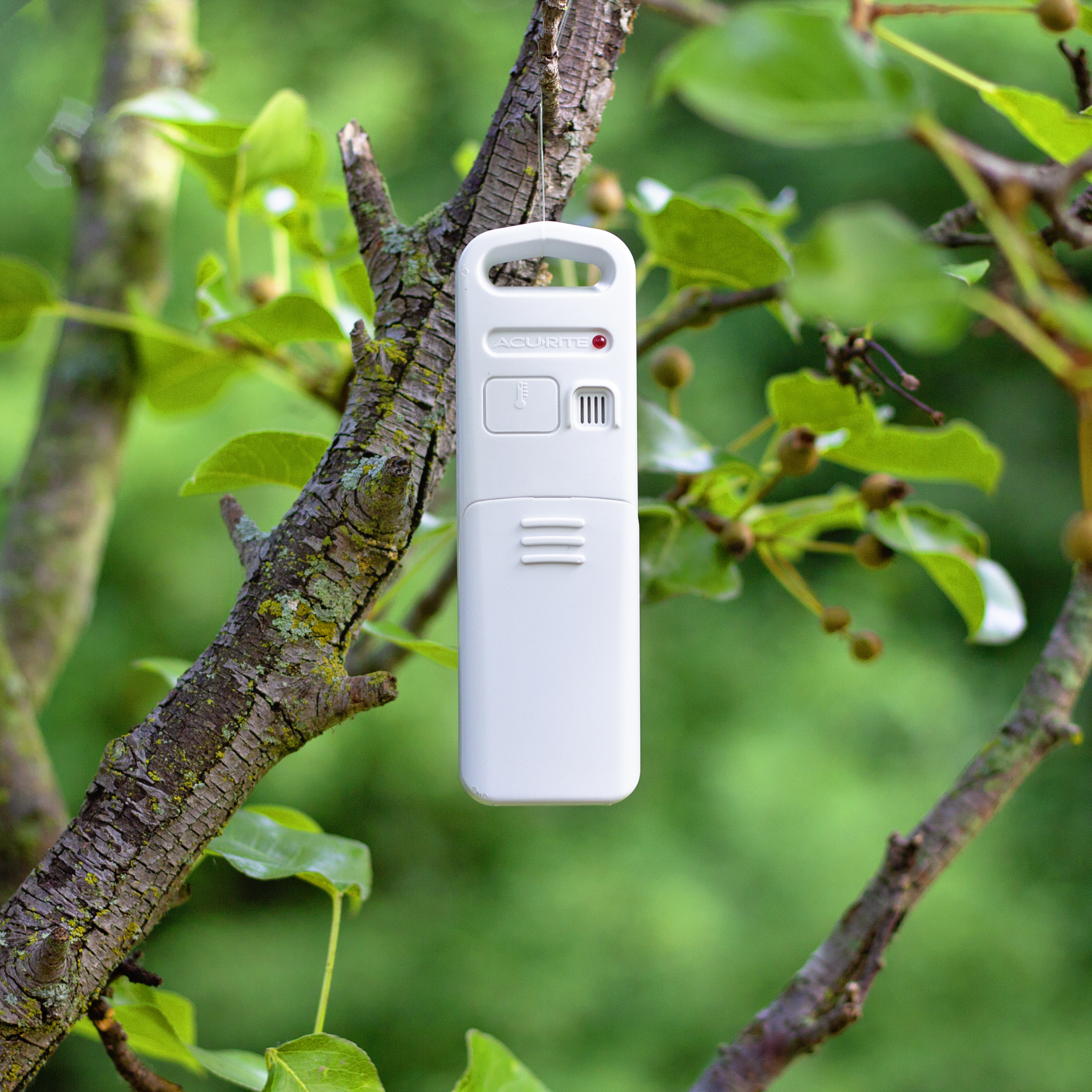 Sensor hanging in a tree