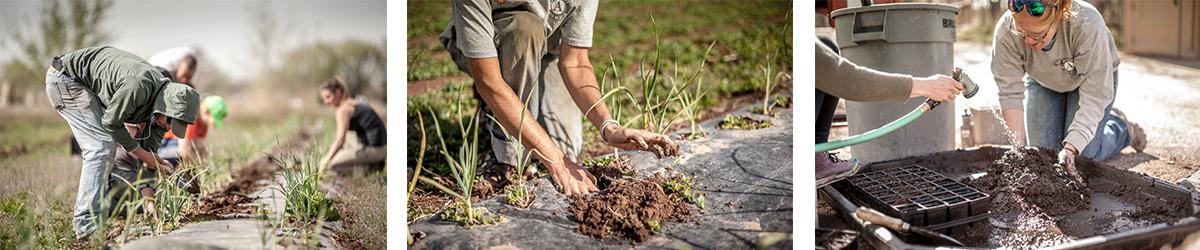 managing irrigation