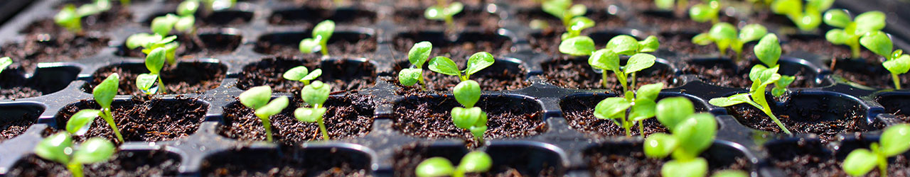 Start Seeds Indoors