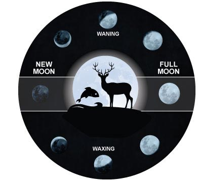 moon phase hunting diagram