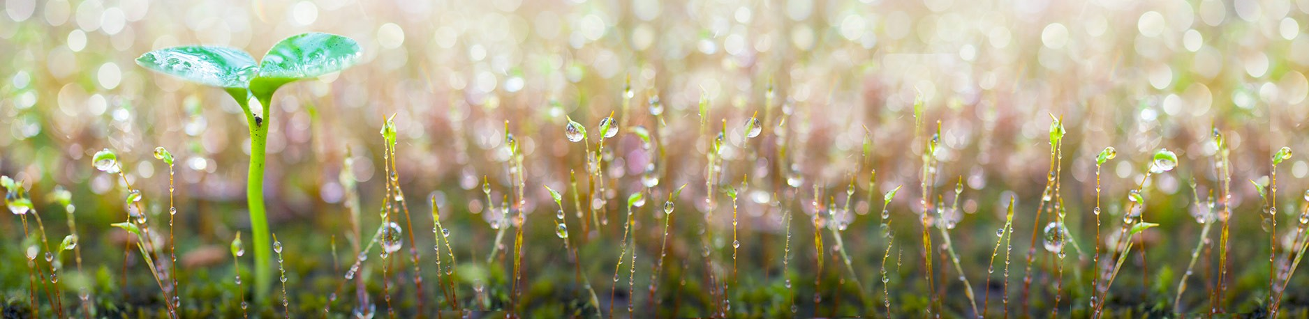 April Showers Bring May Flowers: The Importance of Measuring Rainfall in Your Area