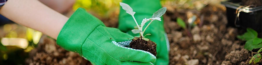 Grow a Thriving Vegetable Garden in a Cold Climate