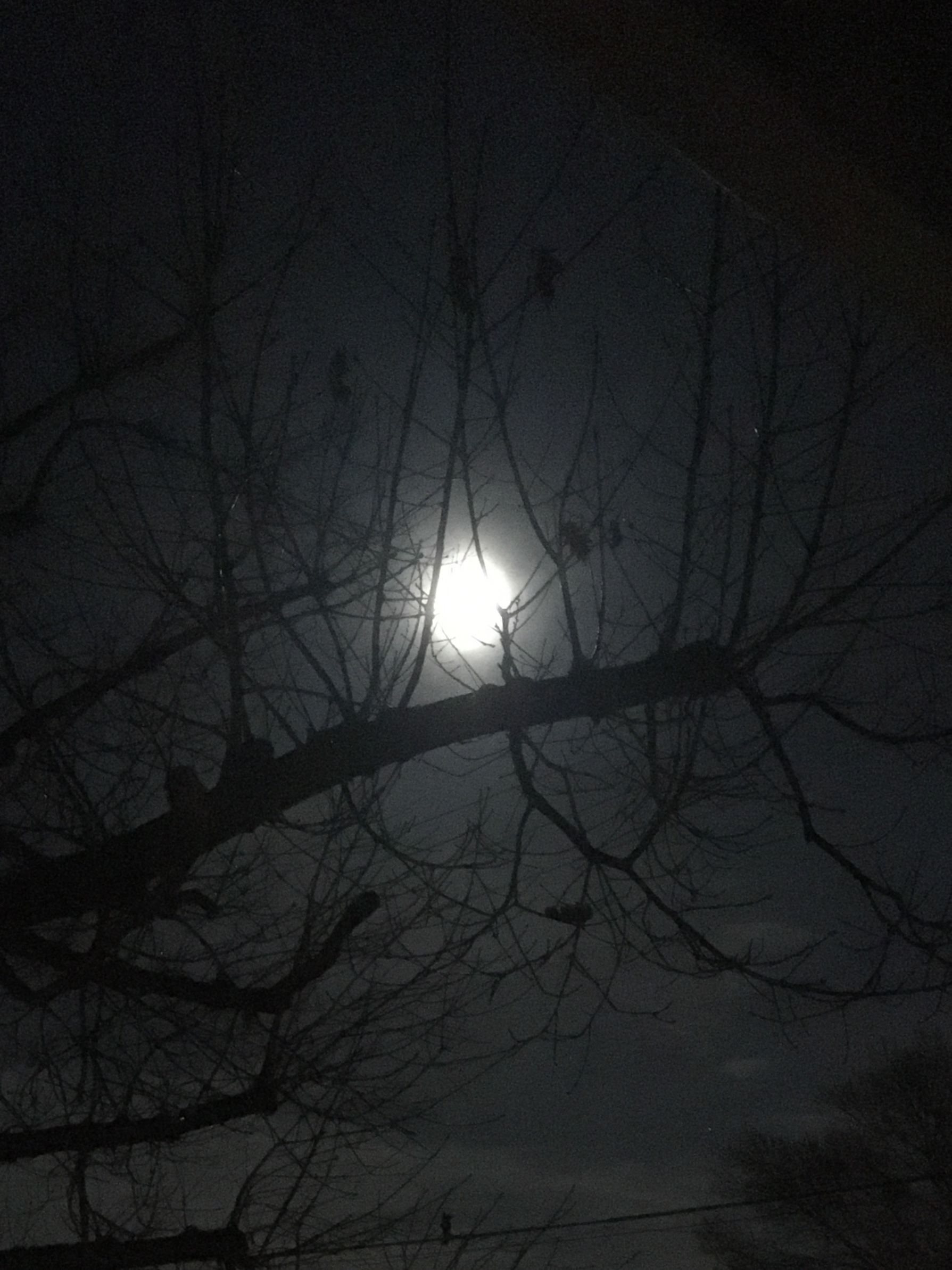 Photo of the moon shot through tree branches