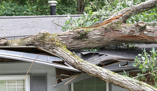 Fallen tree on the roof of a home