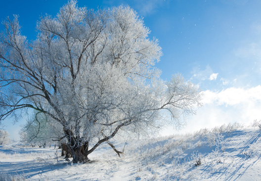 Freezing fog on a tree and hillside