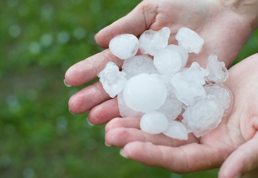 Hail pellets held in hands