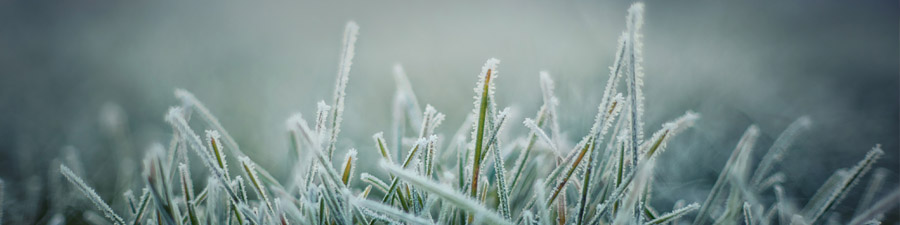 Frost covering blades of grass
